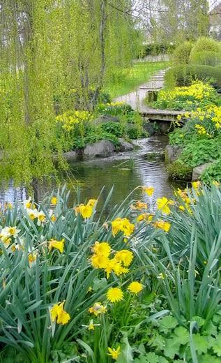 Lustwandeln im japanischen Garten in der Löwenstadt Bonndorf